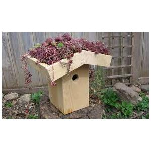 Green Roof Bird House Image
